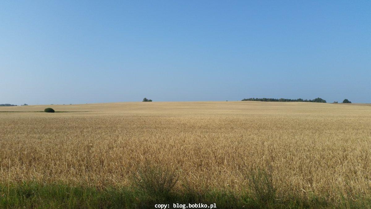 Zboża - przepiękna złota kraina w okolicy Jastrowia